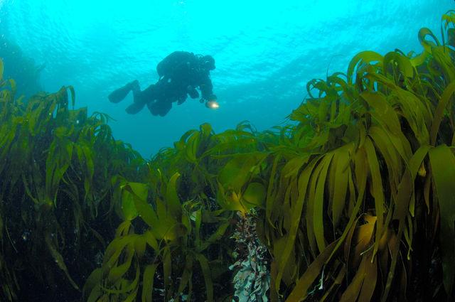 Farsund Ystesteinen duiken Noorwegen