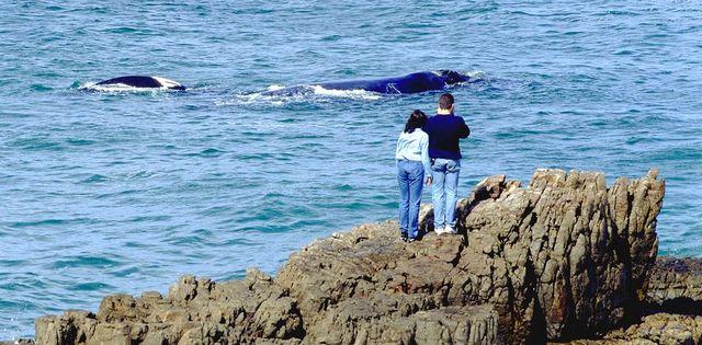 Rondreis Zuid-Afrika Hermanus walvis vanaf kant