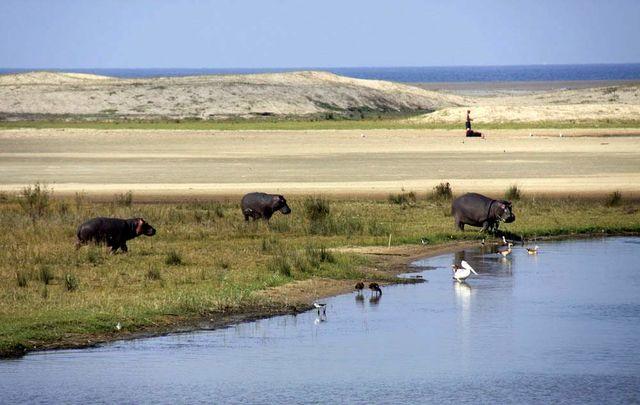 rondreis Zuid-Afrika iSimangaliso wetlands St Lucia