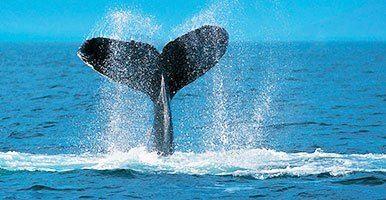 rondreis zuid-afrika durban walvissen