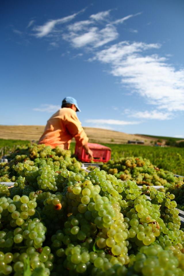 Rondreis Slowfood Italië wijngaard
