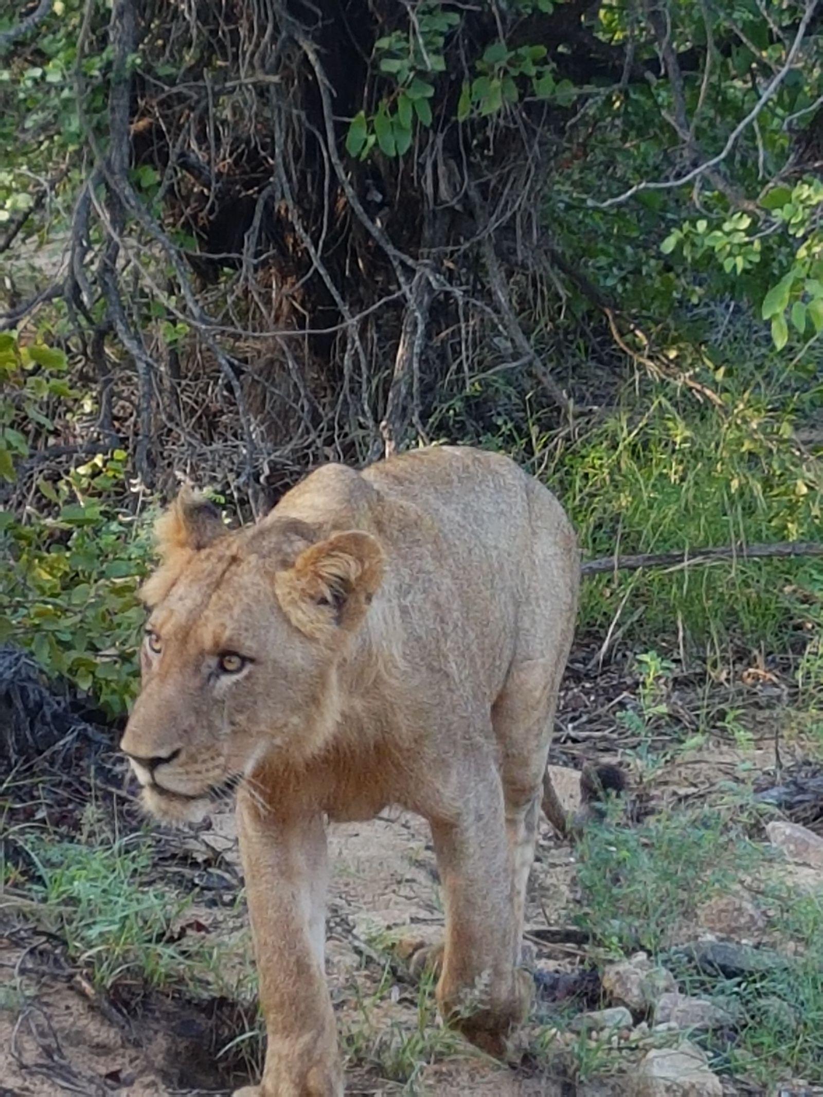 St. Lucia en Hluhluwe Game Reserve | AmbianceTravel