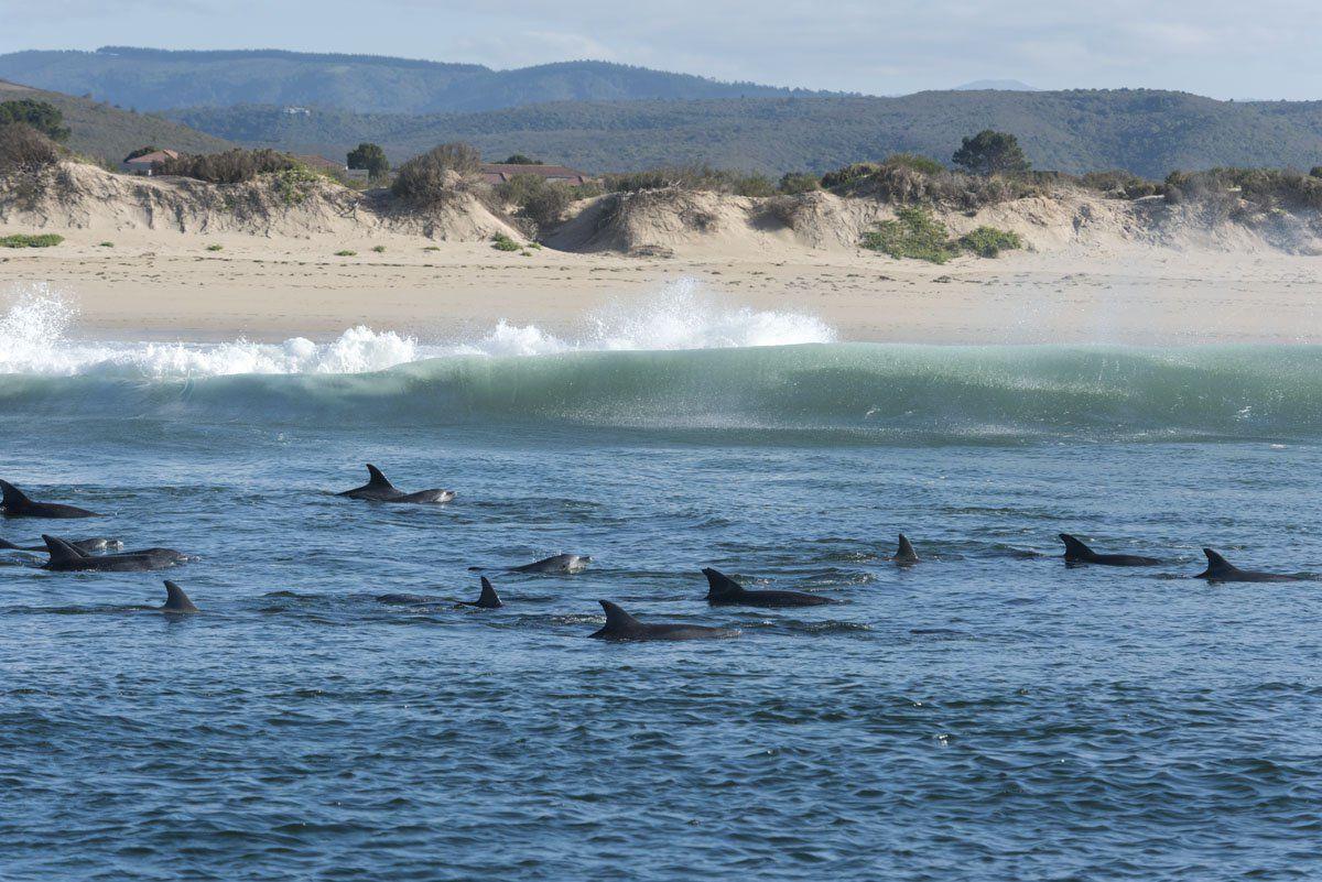 Dolfijnen en walvissen in Alco Bay bij Port Elizabeth | AmbianceTravel