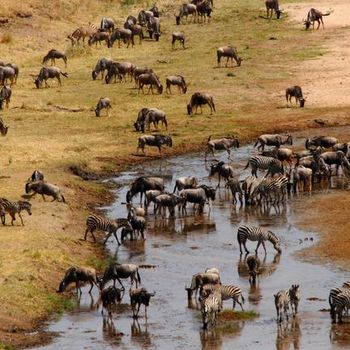 Individuele rondreizen Tanzania | AmbianceTravel