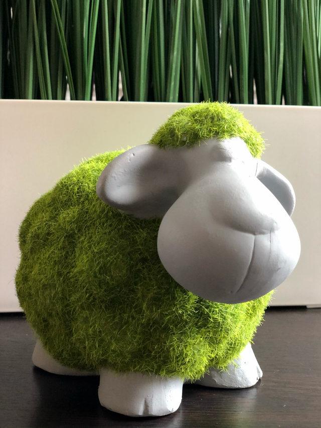 """Mouton en """"herbe"""""""