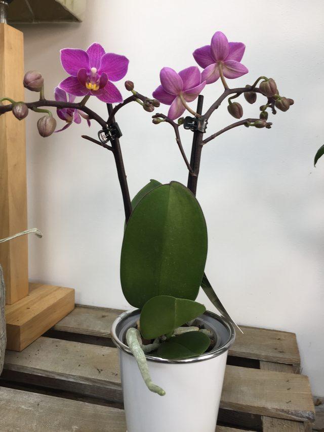 """Orchidée violette """"Moyenne"""""""
