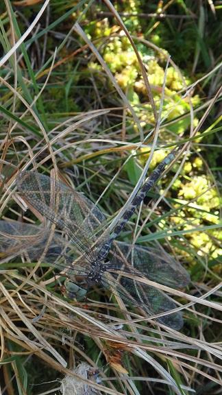 Spectre paisible  - Carine Bidegaray
