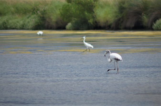 Flamant rose  - Département de La Gironde Espaces Naturels Sensibles