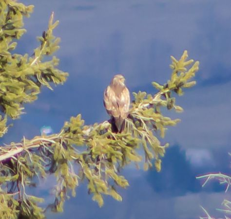 Buse variable  - Andre Lajeunesse