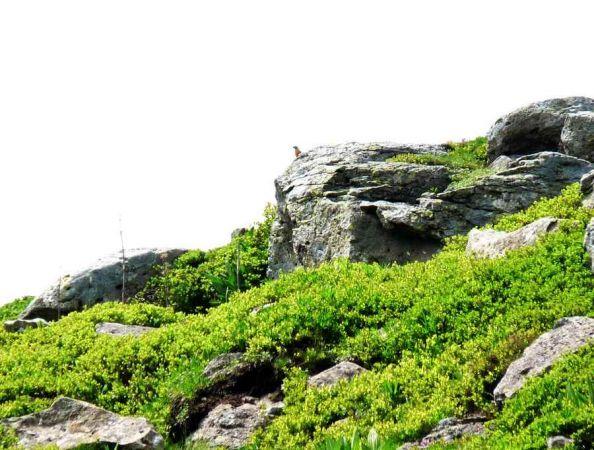 Monticole de roche  - Odile Fix