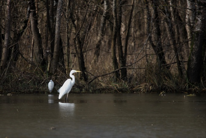 Grande Aigrette  - Liliane Largeteau