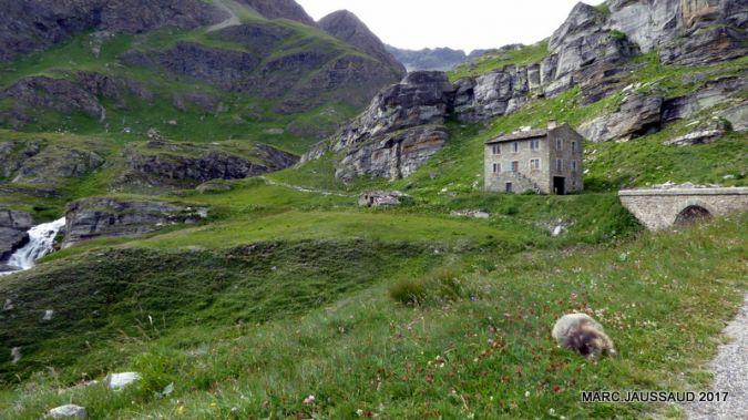 Marmotte des Alpes  - Marc Jaussaud
