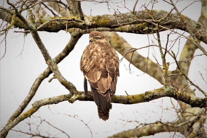 Buse variable  - Jean-Marc Cugnasse