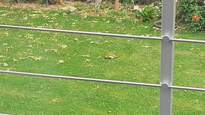 Pic vert  - Yvon Decayeux