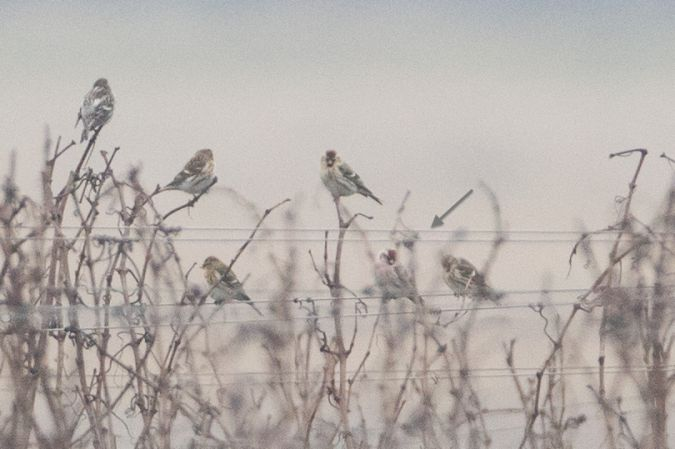 Oiseau indéterminé  - Christoph Kaula