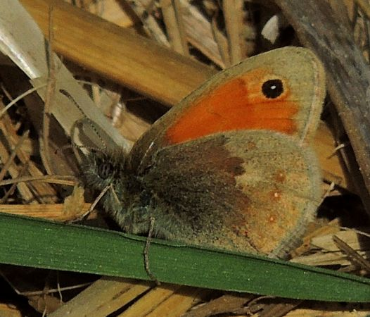 Small Heath  - Víctor Marugán