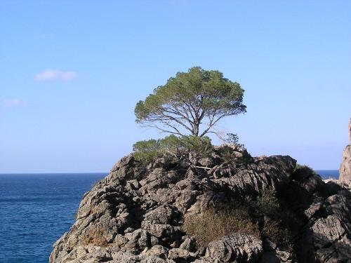 Die Halbinsel Formentor