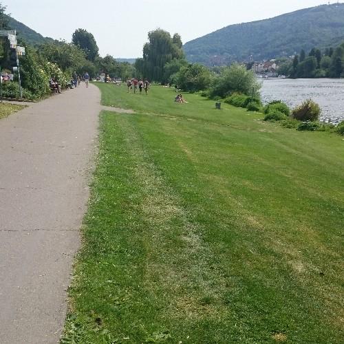 Liegewiese am Neckar
