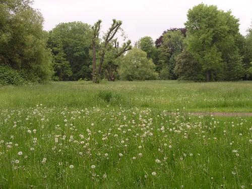 Park oder Landschaft