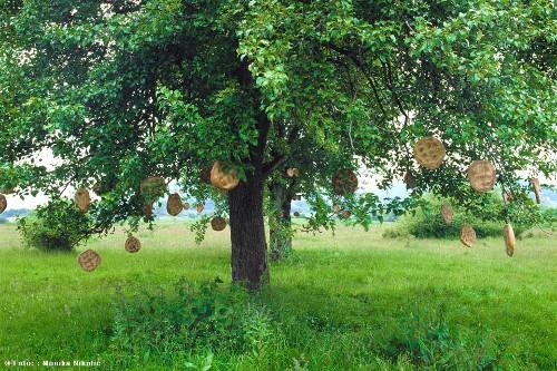 Die Brotfrucht-Plantage