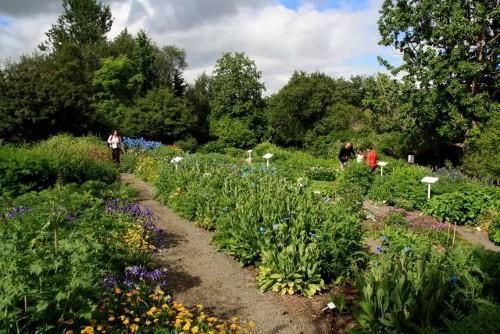 Botanischer Garten Akureyri