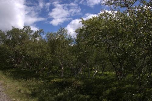 Wald und Waldforschung