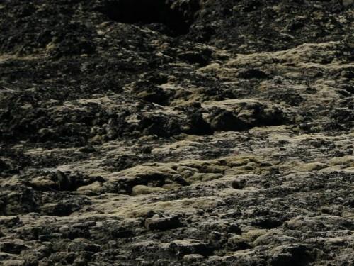 Junge Lavafelder