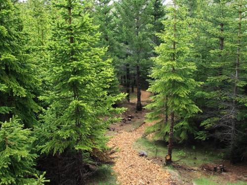 Forstwirtschaftliche Versuchsstation