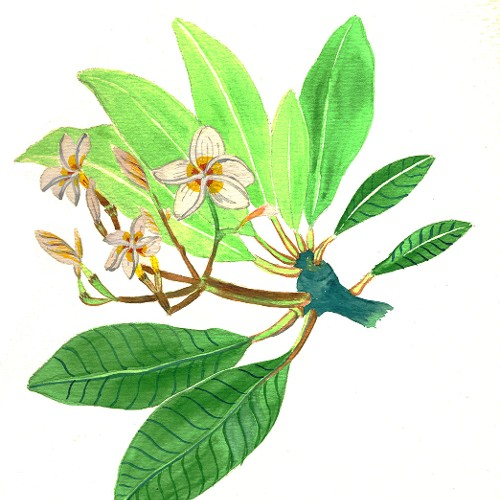 Rhododendronhain