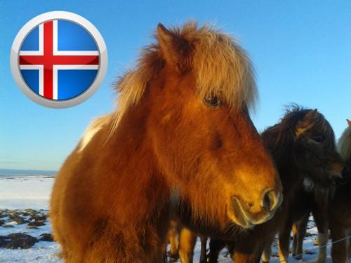 Rund um Island - Tagesetappe Reykjavik - Akureyri
