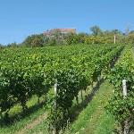 Weinwanderweg Ipsheim