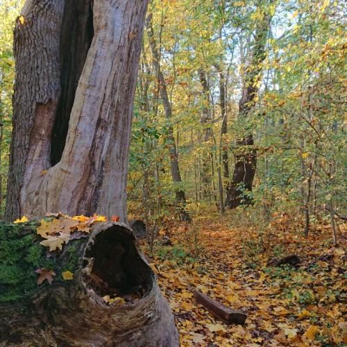Wissenschaftstour durch den Sauener Wald