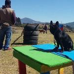 Confianza-Club Canino El Parque
