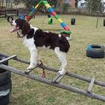 Integridad-Club Canino El Parque