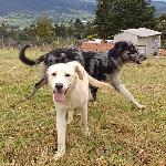 Grandes descuentos-Club Canino El Parque