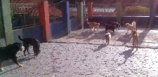 Atención las 24 hrs-Mascotas de la Montaña Guardería