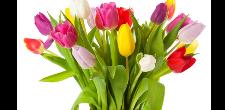 Experiencia-Flor Ideas