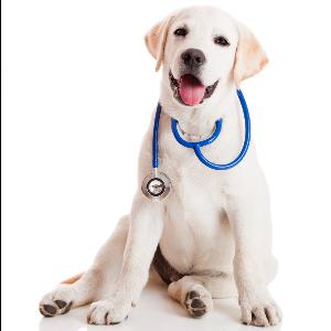 Profesionalidad-Veterinaria Esperanza