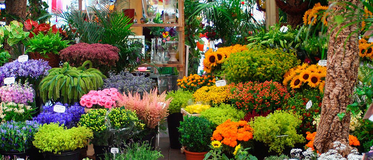 Floristerías en Cajamarca