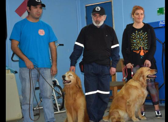 Veterinario en Concepción