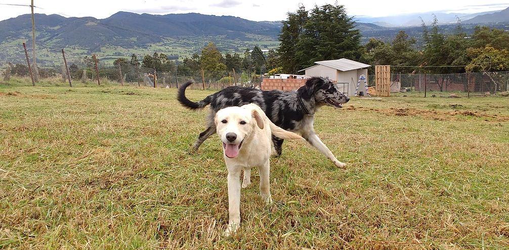 Escuela canina en Bogotá, D.C.