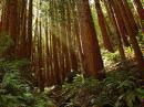 Muir Woods and Sausalito Sightseeing Tour