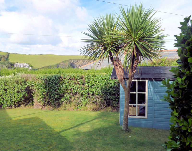 Sheltered by mature hedging the front garden at holiday rental Tamarisk in Port Isaac, Cornwall is lawned and has a pretty Cornish Palm in.