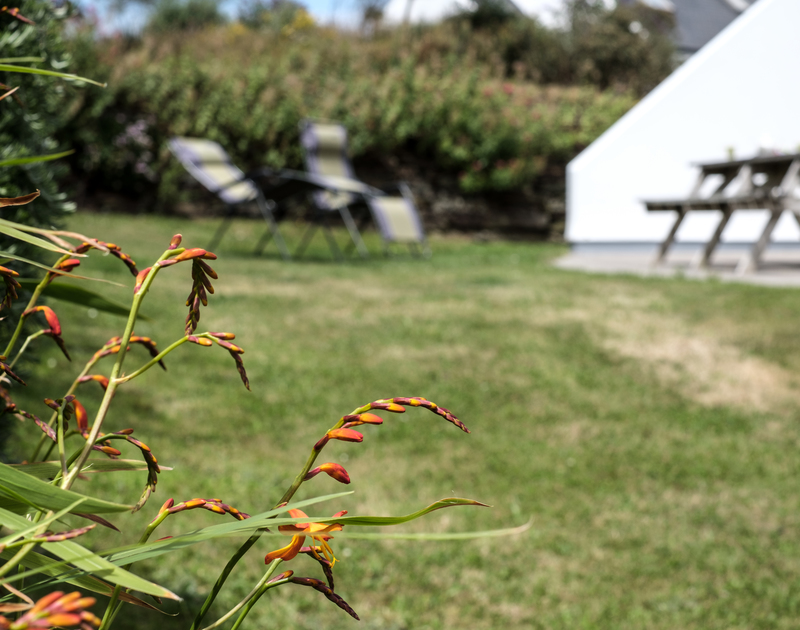 The lawned garden at St Breock has striking, orange coloured Montbretia plants in its borders.