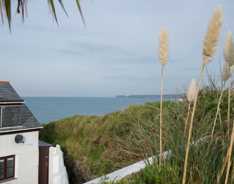 Pampas grass and a palm tree frame the far reaching sea and coastline views out towards Tintagel from the back garden at self catering holiday house Cliffside 1 at Port Isaac.