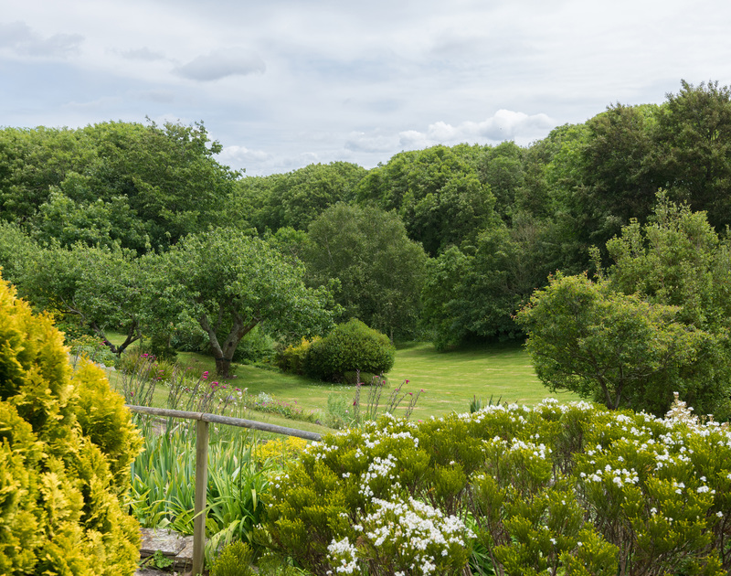 The glorious tree lined gardens at Sliggon Field, a holiday house to rent surprisingly close to the sea and sands of Polzeath and Daymer Bay.