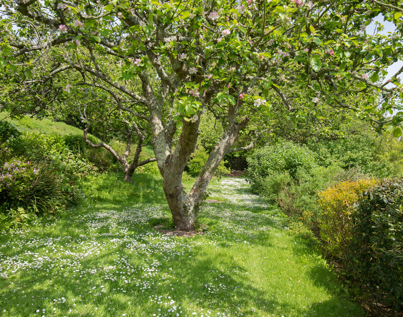 Catch the pretty blossom on the apple trees during springtime holidays at Sliggon Field close to the beaches of Polzeath and Daymer Bay.
