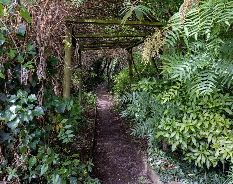 Lush planting provides a green tunnel over a path in the garden at Bodare 1.