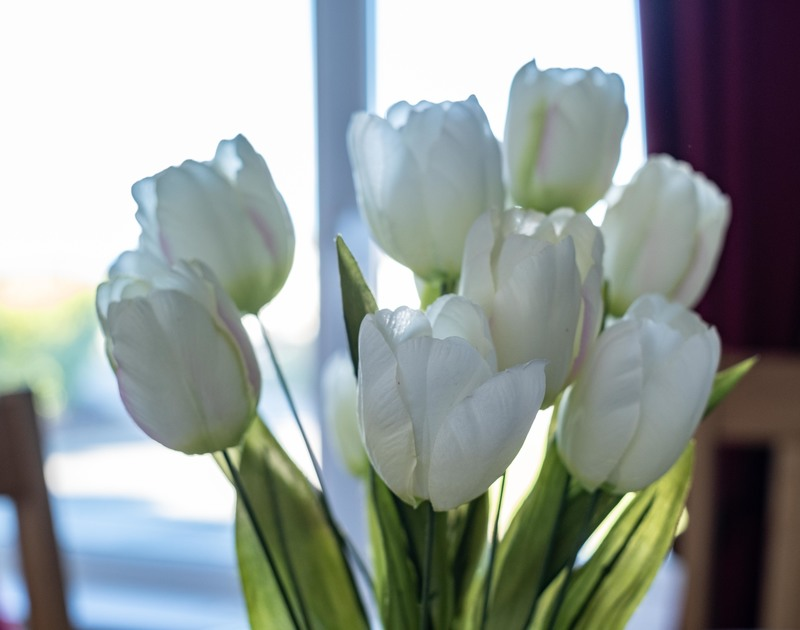 White tulips on the table in self catering holiday property Hillview overlooking Polzeath in North Cornwall.