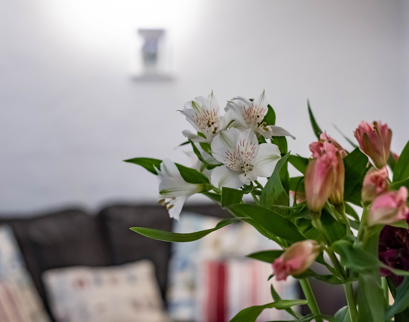 Flowers in the sitting room at St Samsons, a gorgeous old, fisherman's cottage quietly tucked away yet yards from the bustling harbourside of Port Isaac in North Cornwall.